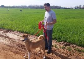 איש וכלב מטיילים בשדה- אילוף כלבים, פנסיון כלבים