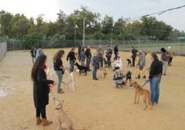 הרבה אנשים משחקים עם כלבים בחוות הכלבים של דרור- אילוף כלבים, פנסיון כלבים