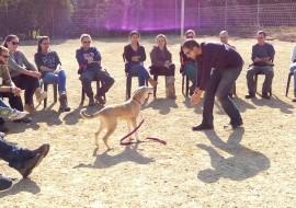 בן אדם משחק עם כלב ואנשים צופים- אילוף כלבים, פנסיון כלבים