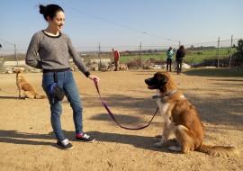 בחורה צעירה מטיילת עם כלב- אילוף כלבים, פנסיון כלבים