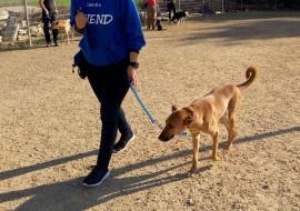 כלב מטייל על עפר- אילוף כלבים, פנסיון כלבים