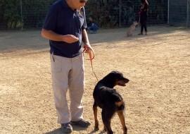 הסימביוזה בין האדם לכלב