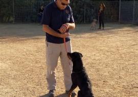 איש מאלף כלב בחוות הכלבים של דרור- אילוף כלבים,פנסיון כלבים