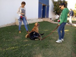 אילוף כלבים בקבוצה