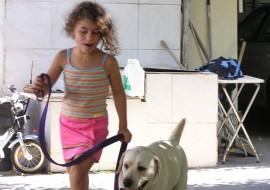 ילדה קטנה וכלב מאושרים מטיילים ביחד- אילוף כלבים, פנסיון כלבים