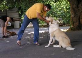 איש מבוגר מלטף בחיבה כלב לבן גדול- אילוף כלבים, פנסיון כלבים